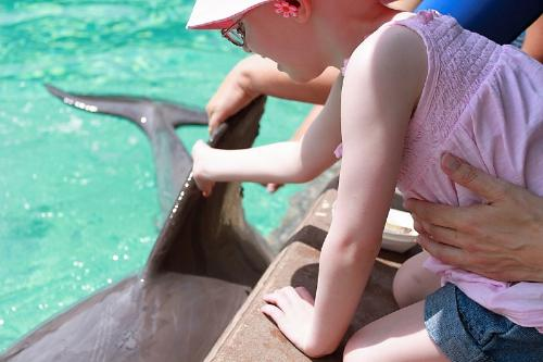 Petting a dolphin at SeaWorld
