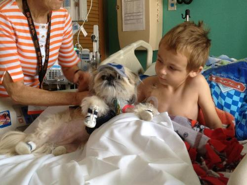 Evan and Coco the therapy dog, May 2012, after round one of chemo.