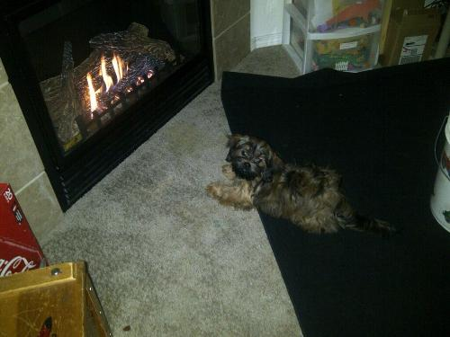 Chloe by the fire!