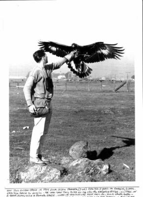 Dad & his golden eagle