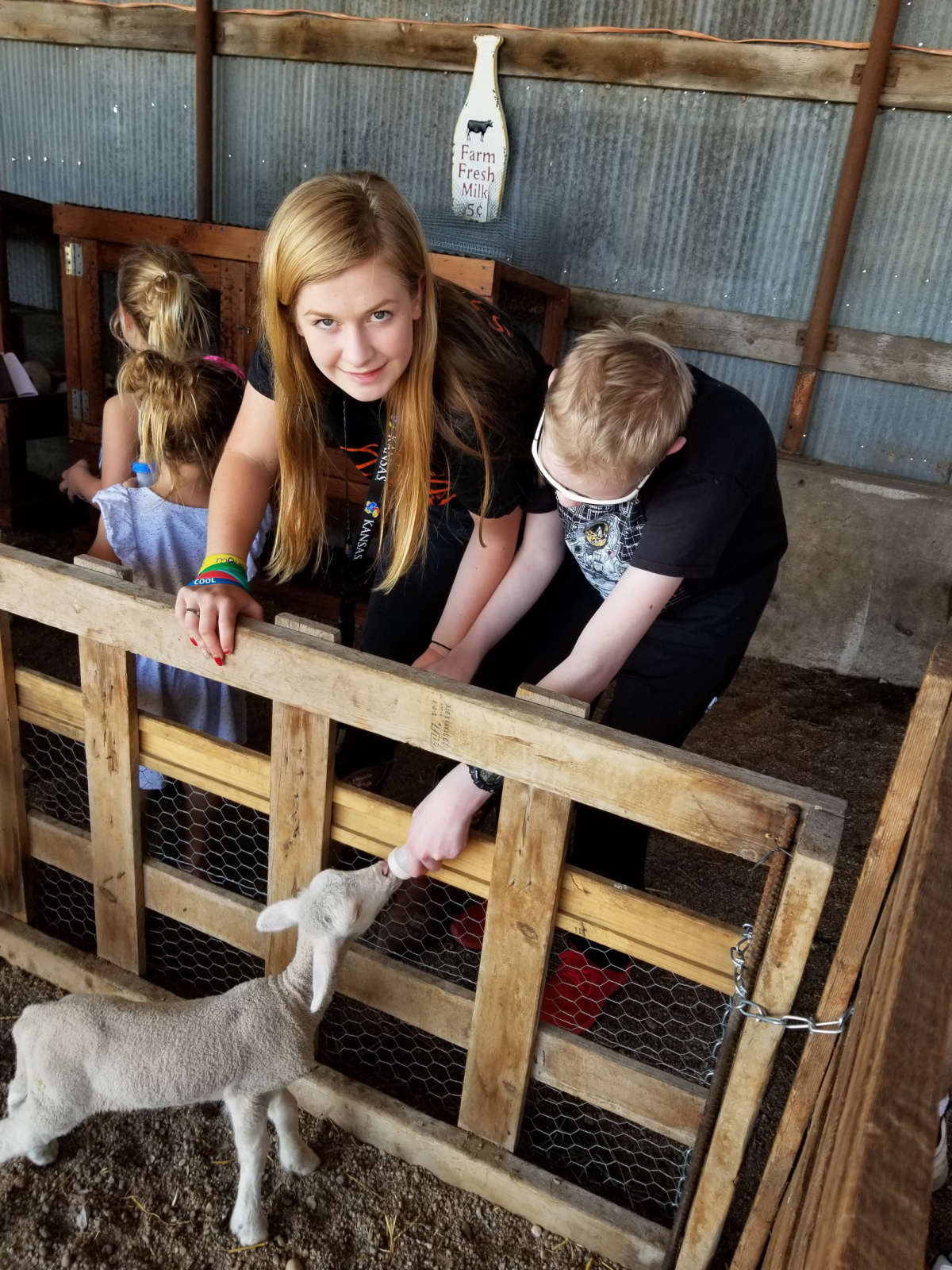 Morgan at work helping Caleb feed lambs.
