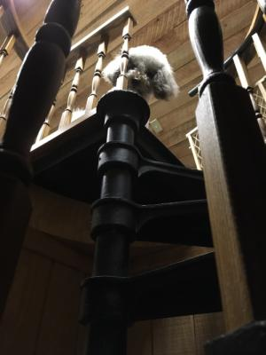 Ezra has been great about going up the metal spiral staircase in the cabin, but not coming down!  This is him staring down, waiting for someone to carry him down. :)