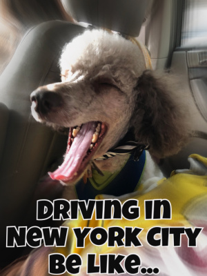 Ezra's thoughts on New York drivers! LOL