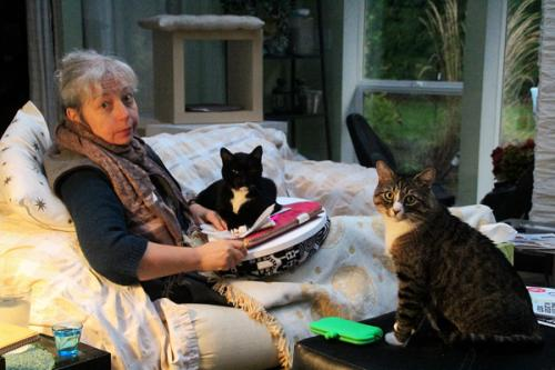 Cats as editors, working on a project: Nov 13, 2014