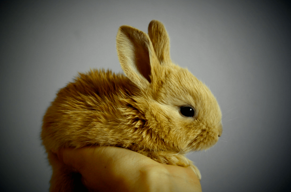 hand outstretched holding pet bunny