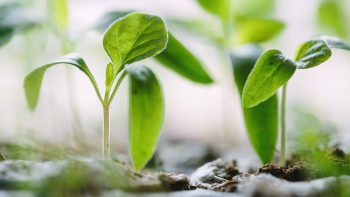 plant a living reminder to memorialize a loved one who has passed